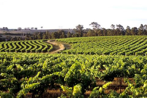 HUNTER VALLEY LUXURY TOUR